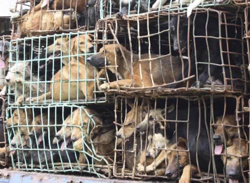 Tailândia apreende 120 cães que seriam abatidos para consumo humano