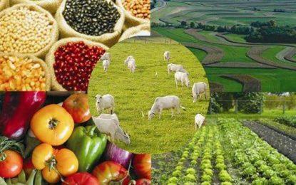 Importância do agronegócio brasileiro
